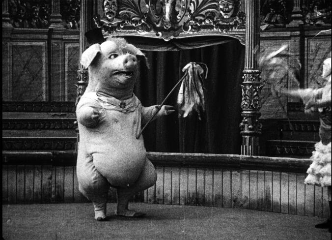 dancing pig 2.png